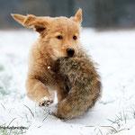 Der erste Schnee für Lotta!