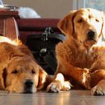 Meine Beiden...Lotta und Ben sie sind ein wundervolles Team geworden <3
