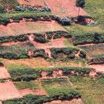 Typische Terrassenfelder im Süden Ugandas