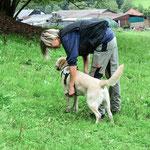 Hier wird einem Rettungshund die sogenannte Kenndecke umgelegt.
