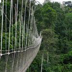Canopy-Walkway Ghana