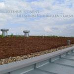 Garten- und Landschaftsbau Gröne  Gründach Firmengebäude extensive Begrünung