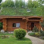 Dachbegrünung  Garten- und Landschaftsbau Gröne