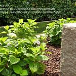 Umgestaltung Privatgarten mit Sandstein, Bepflanzung, Rollrasen