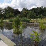 Schwimmteich Naturschwimmteich mit separatem Schwimmbecken und Gegenstromanlage