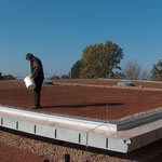 Dachbegrünung Garten- und Landschaftsbau Gröne Einsaat Sedum Sprossenansaat