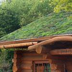 Dachbegrünung  Garten- und Landschaftsbau Gröne Blockhaus mit Sedum Gründach