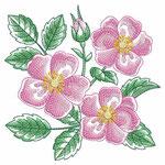 Roses arkansas