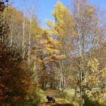 Herbstliches Pockautal