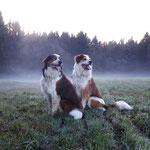 Balu und Samy im aufziehenden Nebel