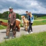 Unterwegs mit unseren Alpakas