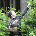 Bäuerin Elfriede beim Fichtenspitzen pflücken