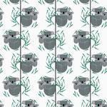 birch - koala koala - bio-webware