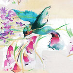c.pauli - kolibri - bio-baumwolle