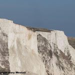 White Cliffs of Dover 2013