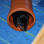 Bijou entdeckt die Röhre ...