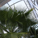 Gewächshaus für Palme