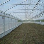 Foliengewächshaus Satteldach, 10 m Breit, Seiten-Senk-Lüftung, Bodenabschluß mit Paneel