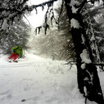 Photo: Stefan Joller / Skier: Erik / Location: in the trees in Valais