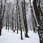 Photo:  Philipp / Skier: Stefan Joller / Location: Sottoceneri, Lugano, Switzerland