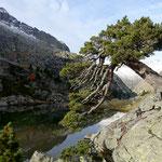 Photo: Stefan Joller / Location: Parc Nacional d'Aigüestortes i Estany de Sant Maurici, Pyrenäen, Spanien