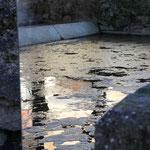 l'étang de la Marmory