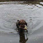kein Problem - die Ente hol ich aus dem Wasser
