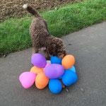 Die Balons haben wir beim Spaziergang auf dem Weg entdeckt. Irma fand diese bunten Teile sehr interessant.