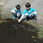 春の水溜りで見かけたカエルの卵