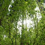 新緑の森の中