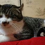 モデルの実物の猫です。