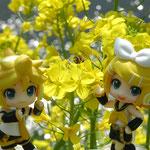 菜の花にミツバチとねんどろいどぷちのリンレン
