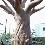 表面硬質ウレタンコーティング 巨木