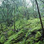 岩肌に苔のじゅうたん