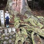 石垣と根と小人
