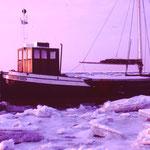 Hans von Wilster, im ersten strengen Winter 1982, von Folkert Bockentien wieder auf den Namen Hans getauft.