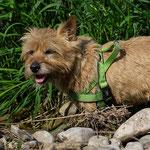 Trudi, der Gute-Laune-Terrier