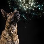 Chipa und der Blick ins Universum