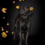 Lui, der Träumer im Herbstlaub