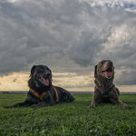 Labradorpower! Aaron und Lucy