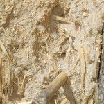 Nisthilfe aus einem Lehm-Sand-Gemisch mit den Spuren von Schnäbeln