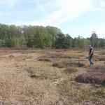 Heidefläche am Steiner See in Hlltrup - Mitglieder der AG Bienen schauen sich die Pflanzen der Besenheide (Calluna vulgaris) an. Sie kontrollieren den Zustand der Pflanzen und suchen nach den vorkommenden Bienenarten.