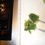 zum schluss 1tl goldrute und 1tl zinnkraut kurz mitkochen