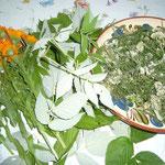 dreierlei kräuter: ringelblume, himbeerblättchen(zarte), schafgarbe