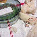 zum nassfilzen braucht man: seifenlauge, ca. 40°C, filzwolle, garn