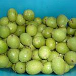 gesammelte grüne walnüsse; darauf achten, das die früchte fleckenlos sind