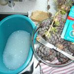 kernseifen-fußbad, harz und pflasterl