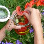 die blüten des klatschmohnes direkt ins glas geben