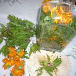 zerkleinern und in ein glas geben und mit weinbrand oder ansatzkorn auffüllen mit destiliertem wasser auffüllen