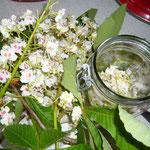 blüten werden abgezupft